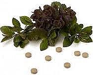 pemf8000 healing herbs