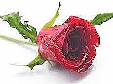 pemf8000 rose hips heal