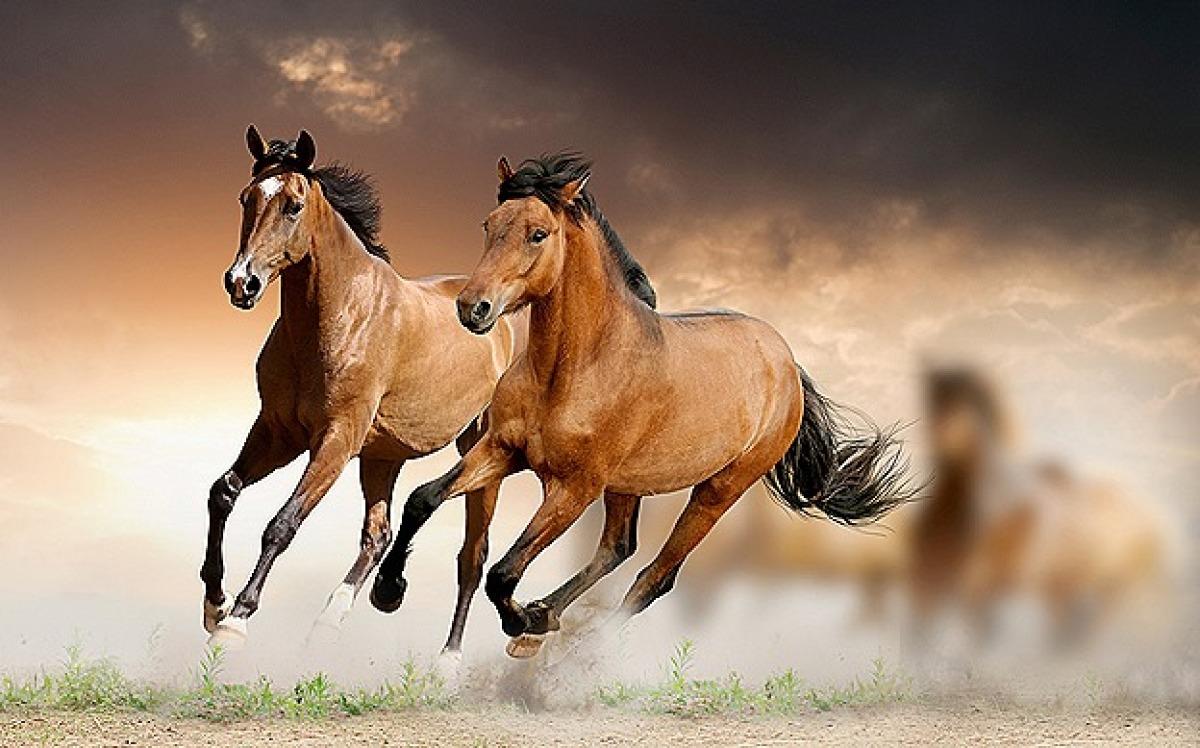 PEMF EQUINE Device horses-pemf 8000