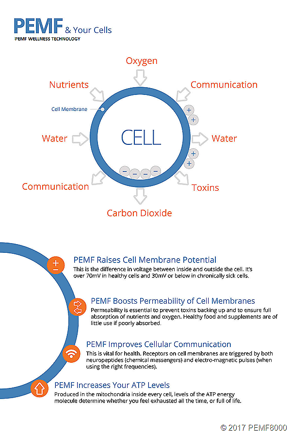 PEMF-And-Your-Cells-Infographic-
